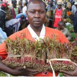 miraa-continues-to-serve-as-unifying-symbol-of-divided-horn-of-africa